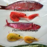 Cure-All Bait Cure-Universal Bait Cure Kendaco, Fluorescents Red, Fluorescents Orange, Fluorescents Chartruese
